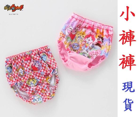 小褲褲現貨供應